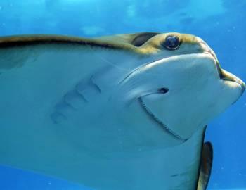 Loveland Living Planet Aquarium   Things to Do in Salt Lake City - Utah's Best Vacation Rentals