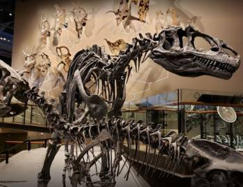 Utah Museum of Natural History   Things to Do in Salt Lake City - Utah's Best Vacation Rentals