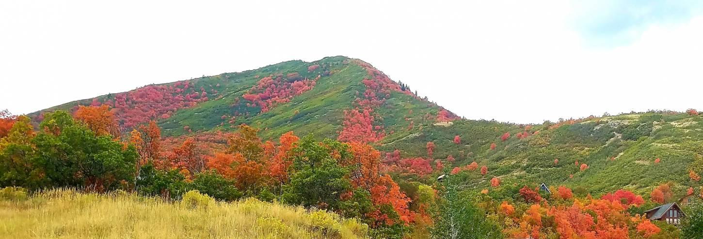 Fall Colors in Utah | Top Places to See Fall Leaves in Utah - Utah's Best Vacation Rentals